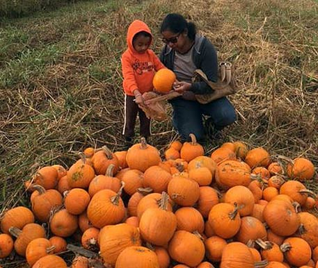 Woman and Boy Choosing a Pumpkin in Dayton, OH.